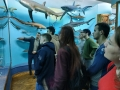 MuseumOfNature_04