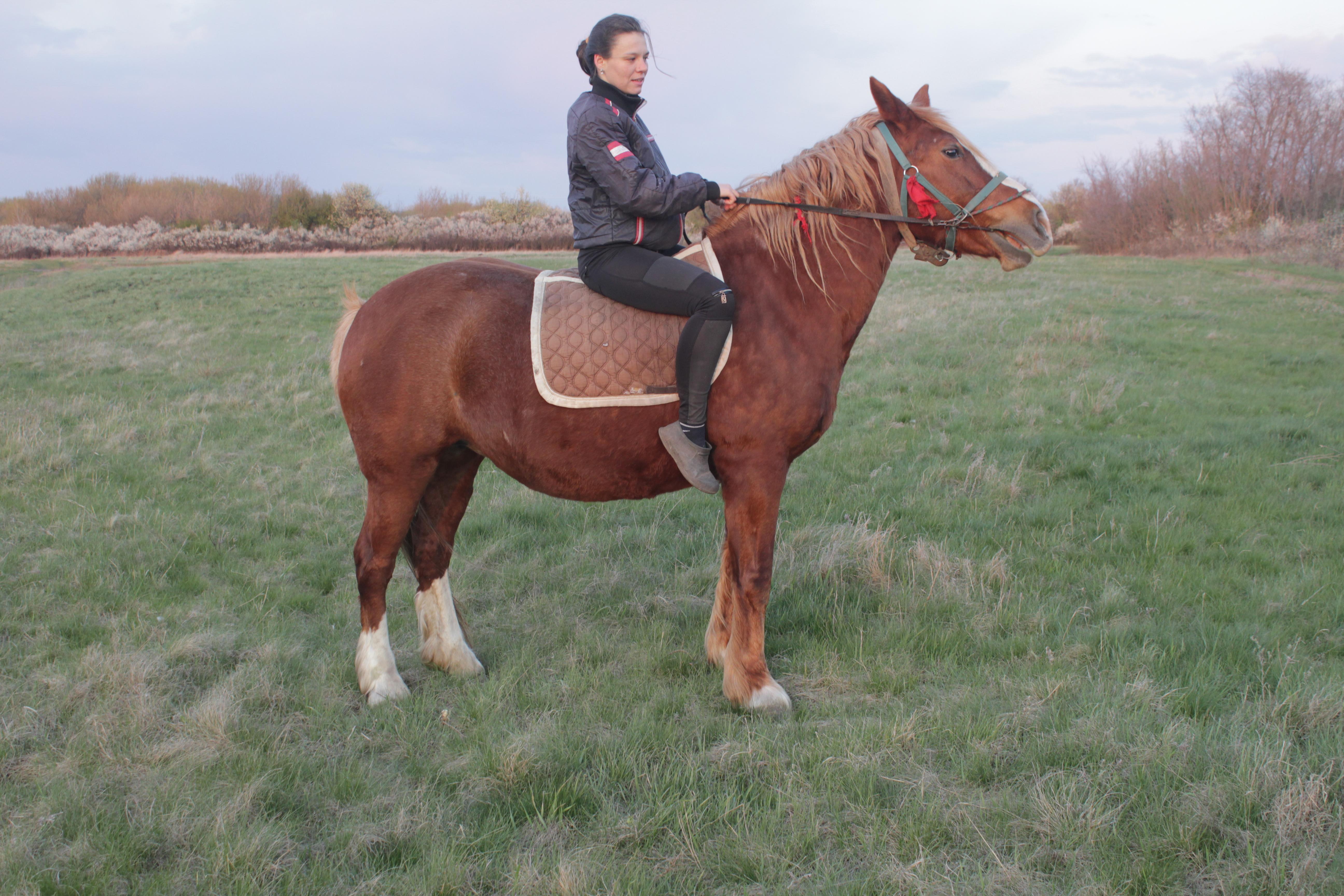 Мележик_лошадь