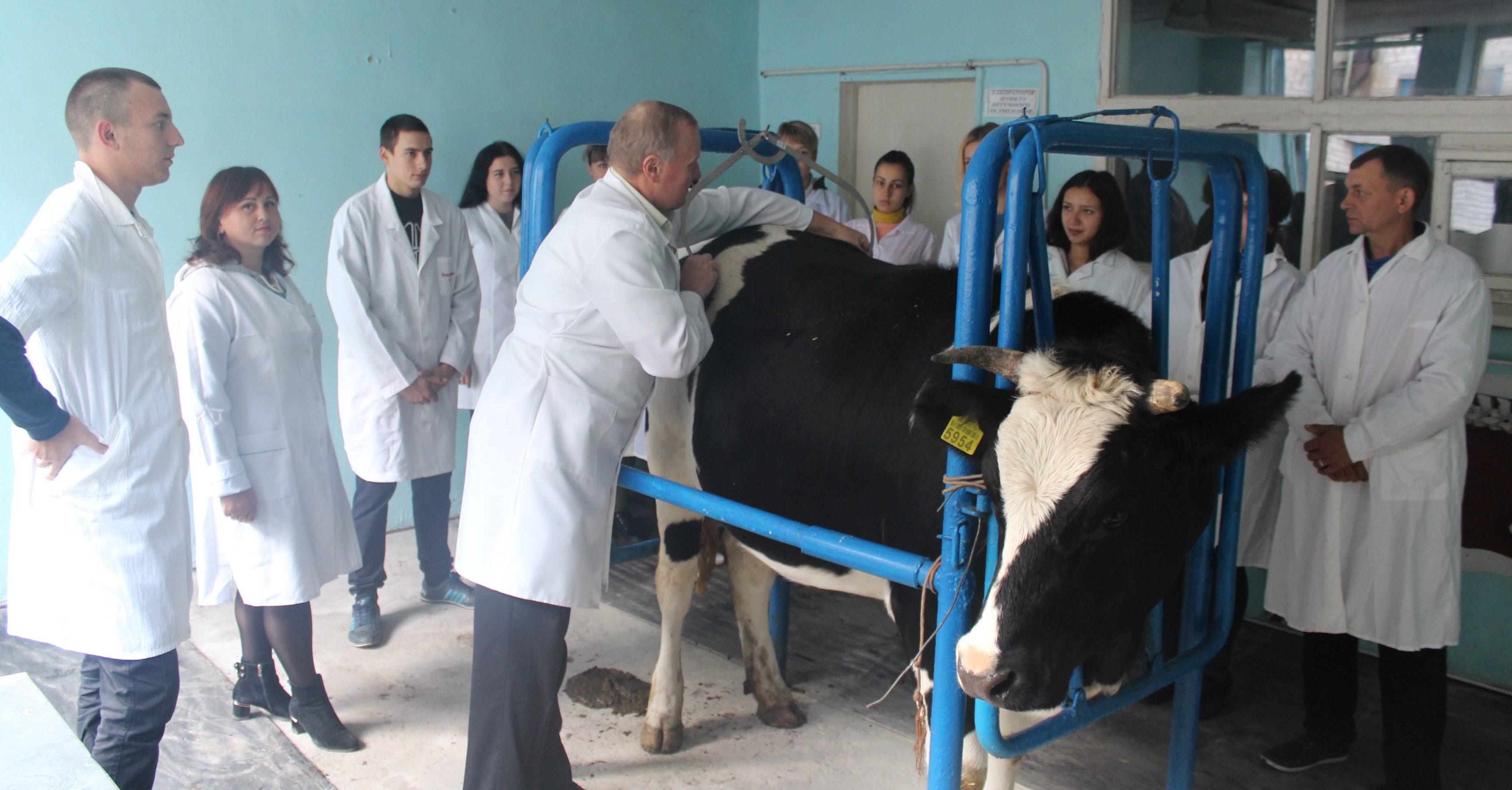 90-60-90 або Ідеальні параметри великої рогатої худоби